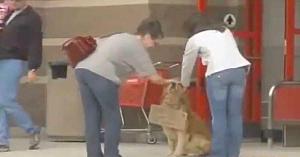 Oamenii erau confuzi când vedeau câinele aşteptând în faţa magazinului, apoi au citit cartonul de la gâtul lui