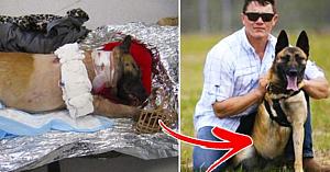 Câinele a fost împuşcat de 4 ori salvând vieţile soldaţilor - dar a primit cel mai frumos cadou oferit vreodată