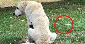 Stăpâna îşi găseşte câinele străpuns de o săgeată – dar este uluită atunci când descoperă acest detaliu important