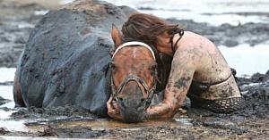 O femeie stă neclintită ore în şir lângă un cal captiv - apoi un fermier îşi face apariţia în ultima secundă
