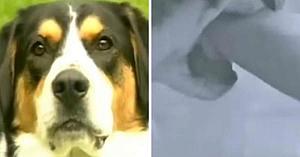 Câinele muşcă mâna stăpânei după ce îl ameninţase că îl va da, apoi ea realizează care era adevăratul său motiv