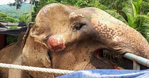 Turiştii râd când se plimbă cu elefanţii, însă în realitate acest adevăr cumplit îţi sfâşie inima