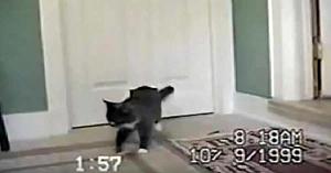 Această pisică vine acasă cu un prieten... Atunci când stăpânii se uită mai atent, nu le vine să-şi creadă ochilor