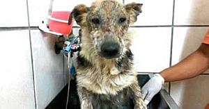 Acest câine a fost lăsat să moară de fostul stăpân – priviţi-i cu atenţie ochii atunci când are parte de o baie caldă pentru prima dată
