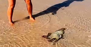 O familie salvează o caracatiţă eşuată pe plajă. A doua zi când se întorc au parte de surpriza vieţii lor