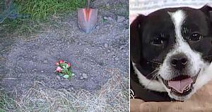 Această familie tocmai îşi îngropase câinele mort. 14 ore mai târziu deschid uşa şi rămân fără cuvinte