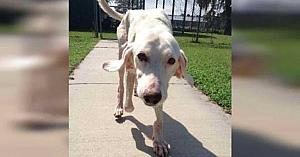 Un câine adoptat s-a întors de 11 ori la adăpost - apoi voluntarii îşi dau seama de adevărul tulburător