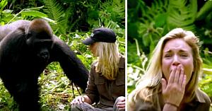 După 6 ani petrecuţi în sălbăticie, această gorilă se întâlneşte cu soţia celui care a crescut-o. Interacţiunea lor e uimitoare