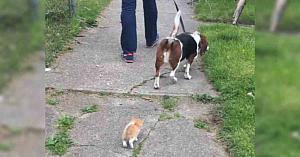 Un pisoi orfan îl urmărea în fiecare dimineaţă când scotea câinele la plimbare. Apoi a surprins aceste imagini adorabile