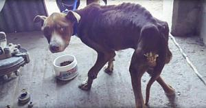 """Stăpânul """"a uitat"""" să-şi hrănească câinele - urmăriţi transformarea sa când un om inimos îi dă un castron cu mâncare"""