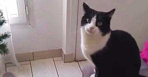 O pisicuţă adorabilă vrea cu disperare să meargă afară - însă modul prin care cere acest lucru nu trebuie ratat