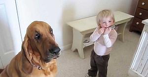 Un băieţel începe să cânte la muzicuţă, însă câinele familiei este cel care atrage toate privirile
