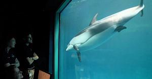 Femela delfin se comporta ciudat, apoi angajaţii delfinariului sunt martorii unei scene memorabile