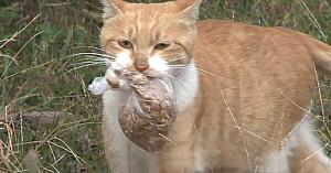 O pisică fără stăpân accepta mâncarea doar dacă era într-o punguţă. Apoi au urmărit-o şi i-au descoperit secretul