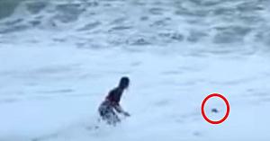 Un val uriaş îi înghite câinele, însă când stăpâna se aruncă în mare - toată lumea îşi ţine respiraţia