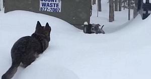 Un câine neajutorat rămăsese blocat într-un troian de zăpadă. Dintr-odată observă Ciobănescul German venind spre el