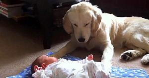 Mama îşi lasă copilul să stea pe covor unde se poate mişca în voie. Priviţi reacţia câinelui