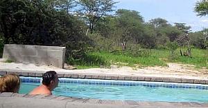 Acest bărbat a încremenit când a văzut cine decide să i se alăture la piscină... Fantastic!