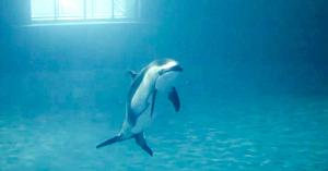 Delfinul se comporta ciudat, apoi angajaţii delfinariului observă ceva ce nu le este dat să vadă în fiecare zi