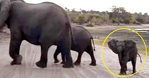 Se aflau în safari când o familie de elefanţi le taie calea. Imaginile surprinse i-au făcut pe toţi să râdă cu poftă
