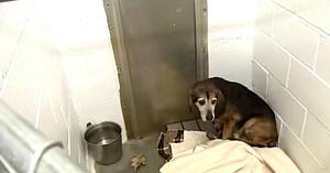 Câinele dispăruse de 2 ani de acasă. Priviţi momentul emoţionant când aude vocea stăpânului
