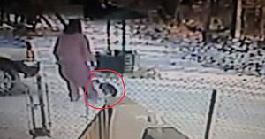A văzut o pisică în curte şi a vrut cu tot dinadinsul să o alunge. Imediat avea să regrete gestul său