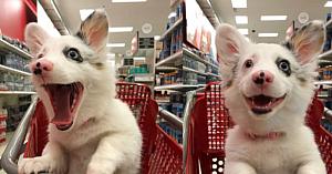 Stăpâna îşi ia căţeluşa de 4 luni la cumpărături. Reacţia ei face furori pe internet