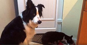 Câinele observă cum pisica familiei îi fură mâncarea. Reacţia lui l-a făcut pe stăpân să pornească imediat camera