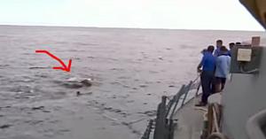 Puşcaşii marini observă în apă ceva de mari dimensiuni. În clipa următoare sar imediat peste bord