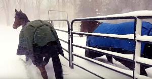 Proprietara dă drumul cailor să alerge prin zăpadă. Reacţia lor imediată i-a făcut pe toţi să râdă cu poftă