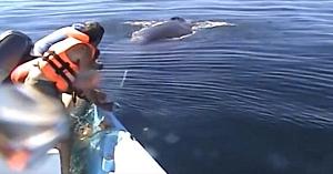 """Trei bărbaţi se luptă să elibereze o balenă dintr-o plasă de pescuit. Nu se aşteptau la uimitorul """"mulţumesc"""" de la final"""