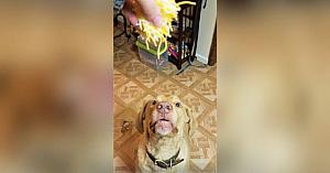 Priviţi-l pe acest câine cum mănâncă brânză rasă! Este cel mai amuzant lucru pe care îl veţi vedea astăzi