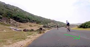 Bicicliştii rulau cu viteză pe drum. Apoi, de nicăieri, un struţ începe o cursă nebunească alături de ei