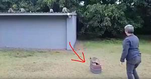 După 3 săptămâni de tratament, acest pui de maimuţă este eliberat. Priviţi momentul emoţionant când îşi revede mama