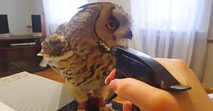 Proprietara se pregăteşte să îmbăieze bufniţa cu ajutorul unui pulverizator. Reacţia păsării este adorabilă