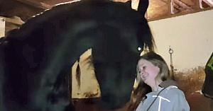 Metoda acestui cal de a obţine o îmbrăţişare este pe cât de adorabilă, pe atât de eficientă!