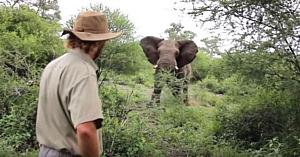 Bărbatul observă un elefant îndreptându-se spre el. Filmarea surprinsă câteva clipe mai târziu te lasă fără cuvinte