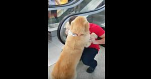 Acest câine este îngrozit de scările rulante. Soluţia stăpânului topeşte inimile tuturor