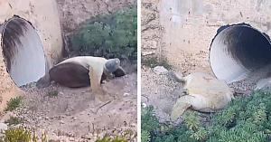 Un bărbat observă o ţestoasă răsturnată lângă un pod. Imediat îşi dă seama că nu are timp de pierdut