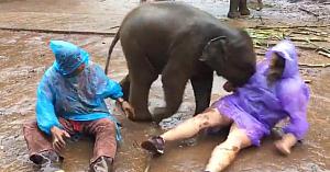 Puiul de elefant o doboară pe această femeie. Abia apoi ea realizează care erau adevăratele sale intenţii