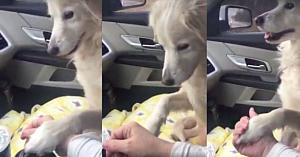 O femeie adoptă un câine fără stăpân: Nu se aştepta la o asemenea reacţie din partea lui