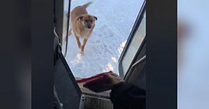 În fiecare zi acest câine aşteaptă sosirea unui anumit şofer de autobuz. Motivul său e înduioşător