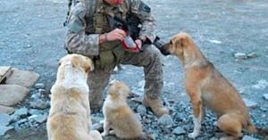 Câinii maidanezi l-au salvat pe acest soldat din ghearele morţii. Priviţi momentul emoţionant când se reîntâlnesc acasă