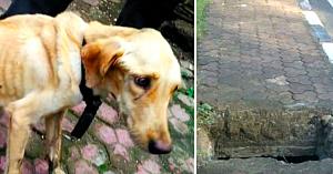 Această căţeluşă fusese lăsată să moară într-o canalizare - povestea supravieţuirii ei e un adevărat miracol