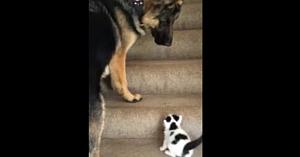 """Câinele observă noul pisoi adoptat chinuindu-se să urce treptele. Cum îl """"ajută"""" este o scenă adorabilă"""