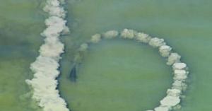 Delfinul creează o spirală din nisip şi aşteaptă. Câteva clipe mai târziu camera surprinde o scenă uimitoare