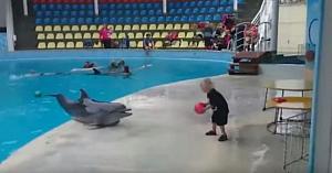 """Delfinul """"sustrage"""" mingea băieţelului. Ce se întâmplă în continuare topeşte inimile tuturor"""