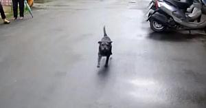 Timp de 6 zile, această căţeluşă nu a găsit drumul spre casă. Are lacrimi în ochi când în sfârşit îşi revede proprietarul