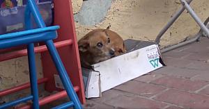 Acest câine fără stăpân îşi ducea traiul într-o cutie de pantofi. Salvatorii o ridică şi înţeleg imediat motivul