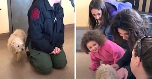 Câinele speriat nu-şi recunoaşte familia, până când stăpâna întinde mâna spre el şi totul ia o turnură neaşteptată